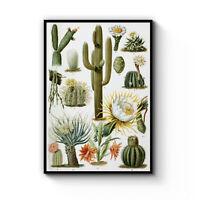 Cactus Botanical Desert Cacti Drawing Vintage Plant Art Poster Print - Framed