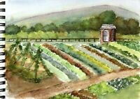 Emergency Survival Vegetable Seed 21 Variety Garden Non-GMO Heirloom Seeds Set