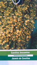 1 gal. Carolina Jessamine Live Flowering Shrubs Healthy Home Landscape Plants