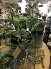 Sage Branch, Crafted Sage Stem, Farmhouse Decor