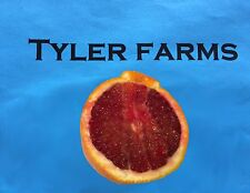 5+ Blood Orange citrus seeds, farm fresh, ready to grow | Grown in the USA