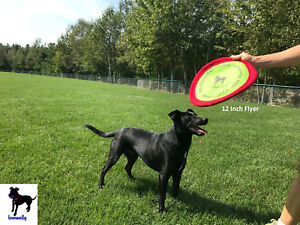 "Soft Bite Dog Toy Flyer Floppy Disc Gentle Fetch Frisbee 12"" Large"