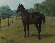 Bonheur Rosa A Bay Horse In a Paddock Canvas 16 x 20   #7255