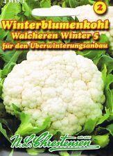 411374 Winterblumenkohl ´Walcheren Winter 5 ´ Blumenkohl Saatgut