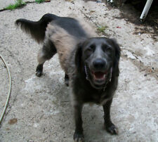 Please Will You Sponsor a Dog to Keep Our Sanctuary Open?