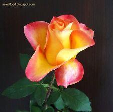 FRESH,70 PC RARA ARANCIONE FIORE ROSA semi giardino pianta * UK STOCK *