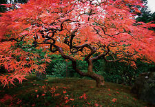 "100"" x 145"" Japanese Garden Portland trees landscape Wall Mural Wallpaper WM4212"