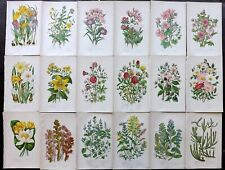 Anne Pratt 1899 Lot of 18 Antique Botanical Prints. Flowers, Book Plates