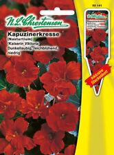 Kapuzinerkresse Kaiserin Viktoria,Tropaeolum majus,Saatgut,Blume,Chrestensen,SpS