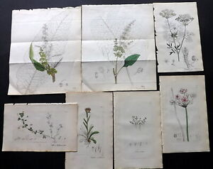 Sowerby 1846 Lot of 13 Partial Hand Col Botanical Prints. Plants, Book Plates