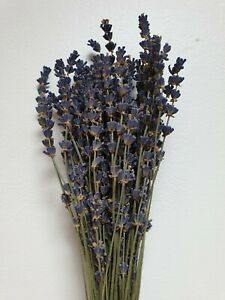 Dried Flower Bunches Palm Spears, Wheat, Fluffy Pampas, Bunny Tails and More!!