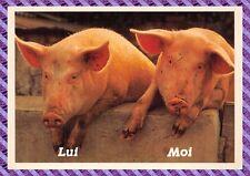 Carte Postale - Cochons