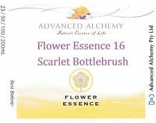 Flower Essence #16 Spiritual Insight - Advanced Alchemy 25ml Scarlet Bottlebrush