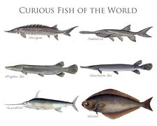 NEW CURIOUS OCEAN FRESH WATER FISH WORLD FISHING CANVAS GICLEE POSTER ART PRINT