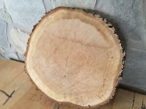 Baumscheibe Eiche ca 35 - 40 cm ×5cm Epoyx, Tischplatte, Holzscheibe