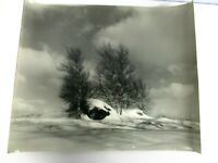 VINTAGE ORIGINAL L WHITNEY STANDISH PHOTOGRAPH of BIRCH TREES & BOULDER IN SNOW