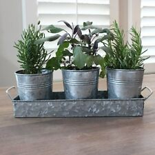 Galvanized Herb Containers and Tray