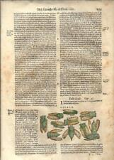 Stampa antica ERBARIO MATTIOLI MATTHIOLI INSETTI CICALA 1645 Old Antique print