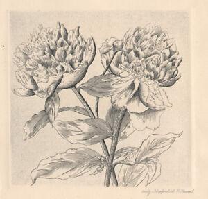 R. Haupt - Still life * ORIGINAL COPPERPLATE PRINT *