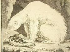 El oso del mar osos forro polar blanco Sea bear grabado por SAP & Rousselet