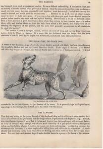 Dalmatiner Spaniel Hunderassen HOLZSTICH von 1866 Dalmatian dog Cocker Spaniel