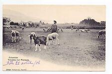 SUISSE SWITZERLAND Canton NEUFCHATEL COLOMBIER troupeau moutons chevre PLANEYSE
