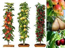 More details for 3 pillar fruit trees apple, cherry & pear garden patio terraces