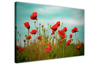 BLOOMING POPPY FIELD CANVAS PRINTS WALL ART POSTERS FRAMED FLORAL PICTURES DECO