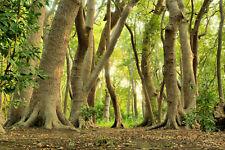 VLIES Fototapete-MAGICHER WALD-(5039S)-Natur Landschaft Panorama Sonne Bäume