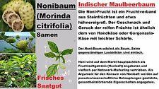 5x NONI Baum Samen Köstlich Frucht Morinda Citrifolia Garten Pflanze selten #253