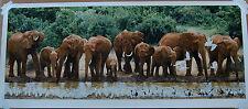 Simon Combes Heavy Drinkers Lt Ed Fine Art Print African Wildlife Elephants