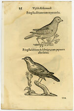 Antique Print-ANIMAL-BIRD-FINCH-ALDROVANDI-Coriolano-1599