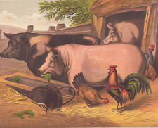 ROOSTER CHICKEN HEN PIGS AT TROUGH FARM ANIMALS ANTIQUE  LITHOGRAPH 1873