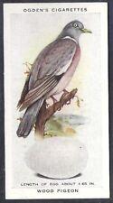 OGDENS-BRITISH BIRDS & THEIR EGGS-#28- WOOD PIGEON