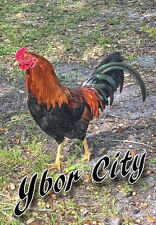 "Ybor City Rooster 3.25""x2.25"" Collectibles Travel Fridge Magnet (PMD10013)"