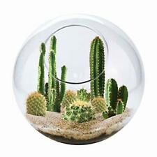 Unique Gardener Grow Your Own Cacti - Desert Terrarium Kit - Just Add Water and