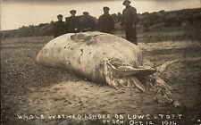 Lowestoft. Whale Washed Ashore on Lowestoft Beach Oct.14 1911.