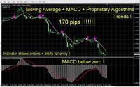 * Most Accurate Forex INDICATOR Signals best Proprietary Algorithms trading fx *