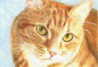 BCB Orange Tabby Cat Close Up Print of Painting ACEO 2.5 x 3.5 Inches