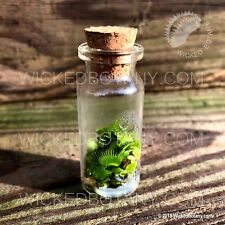 Venus Flytrap Grow Kit - Includes LIVE Mini Apothecary Flytrap (TM) in a Bottle