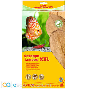 Sera Catappa Leaves XXL 32cm 10 pieces Tropical Almond Leaves Blackwater Tanin