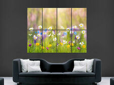 FLOWERS SUMMER POSTER DAISIES NATURE GRASS LARGE GIANT WALL PICTURE PRINT