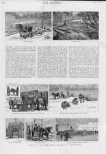 1884 Antique Print - CANADA WINNIPEG Timber Selkirk Fort Garry Ox Cart  (179)