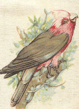 Vintage tobacco cigarette silk card - Birds & Animals Of Australia, Calah Parrot