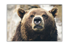 Gizzly Bear Wall Poster Prints Home Deco Premium Gloss Art Pictures