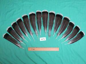 14 pcs  Bronze Turkey Tail  Feathers (Long 18-22cm/Fiber 40-45mm)(1171)