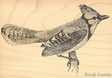 Bluejay Bird, Wood Mounted Rubber Stamp JUDIKINS - NEW, 3567I