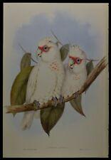 "John Gould Corella Bird Limited Edition Print 21"" x 14.5"""