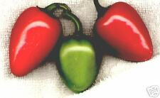 JALAPENO    Chili Pepper Seeds     #2054