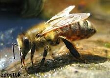 Bee Keeping The Complete & Total Guides Beekeeping 33 ebooks on CD ROM disc